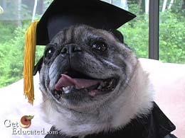 GetEducated.com - Dog graduate of Rochville School